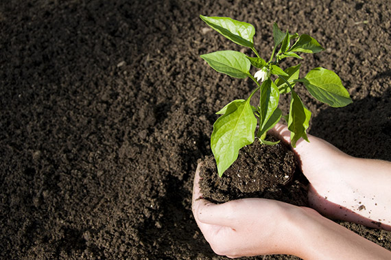 Topsoil landscaping supplies